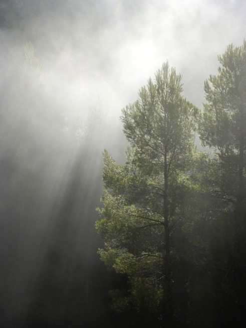forest-1109180_960_720
